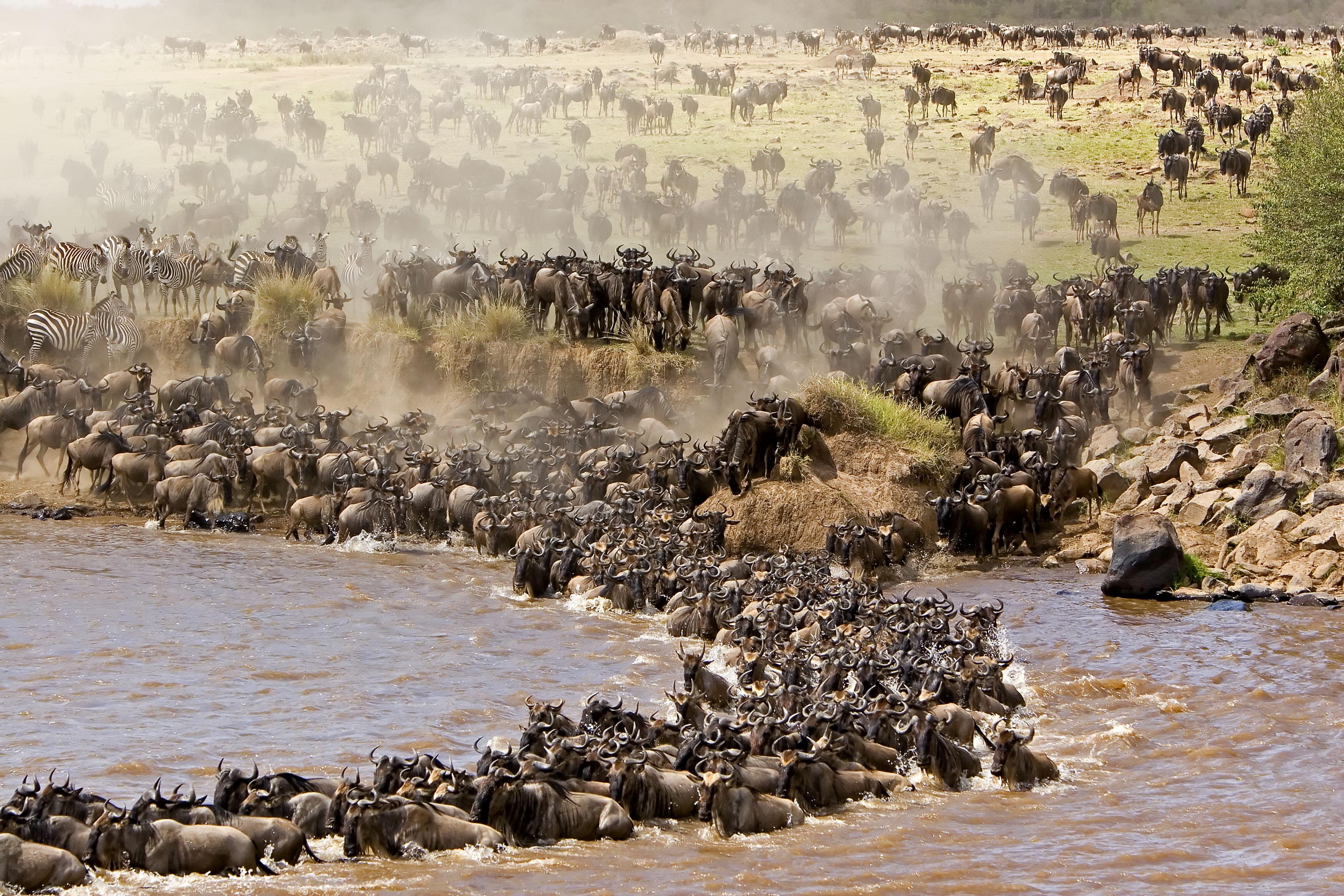 wildebeestMigration2